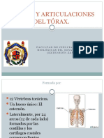 5.HUESOS DEL TÓRAX (con texto)
