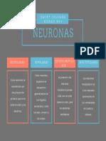 NEURONAS CIENCIAS NATURALES