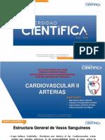 2. CARDIOVASCULAR II - ARTERIAS.pdf