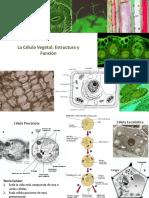 Clase 18. La célula vegetal, estructura funcion tipos celulares y tejidos
