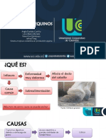 Laminitis equina.pdf