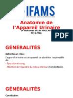 Anatomie Appareil Urinaire