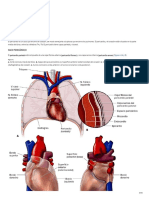 Corazón.pdf