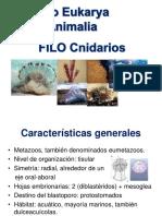 FILO Cnidarios (1)