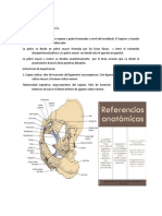 Resumen anatomia urologica