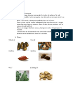 Organoleptic Evaluation of Drugs