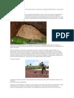 INFLUENCIA DEL PROCESO POSCOSECHA DEL CACAO EN LA CALIDAD SENSORIA DEL CHOCOLATE