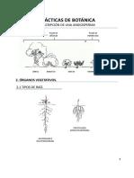Prácticas-4-5-6.-Guion-descripcion-angiospermas