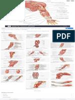 arm diagram left - Google Search.pdf