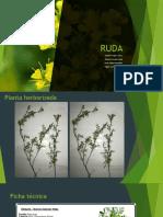 RUDA(1)