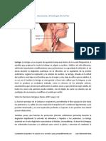 Voz.pdf