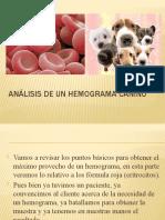 Análisis de un hemograma canino
