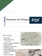 Sabatina de Fitopatologia I.pdf