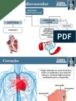 2º Sistema Cardiovascular