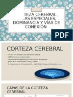 Corteza cerebral, áreas especiales, dominancia y (2)