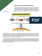AMPK y los cambios metabólicos después del ejercicio -IMPRESO
