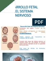 DESARROLLO EMBRIONARIO SN.pdf
