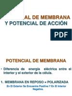 POTENCIAL DE MEMBRANA  Y POTENCIAL DE ACCIÓN.....