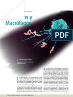 monocitos-y-macrófagos