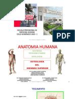 (2) Miología - Osteología del Miembro Superior - 2020  PDF
