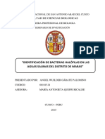 SC-IDENTIFICACIÓN DE BACTERIAS HALÓFILAS EN LAS AGUAS SALINAS DEL DISTRITO DE MARAS-ANGEL GÁRATE.pdf
