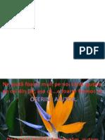 Floarea Pasarea paradisului (Strelitzia reginae)