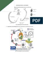 informe 3 parasitologia.docx