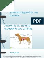 Sistema Digestório em Caninos 2.pptx