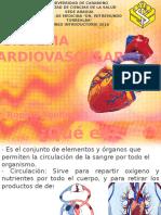 Anatomía-Cardiovascular PP