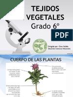 Tema_01._Tejidos_Vegetales_Grado_6°_._Diapositivas_1
