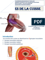 2-MUSCLES CUISSE.pdf