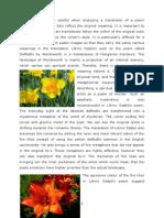 Daffodils forditas