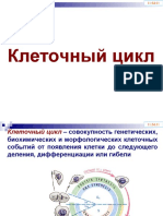 Ciclul celular Rus.pptx