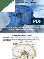 CEREBRO - BANDAS Y COLUMNAS DUDU