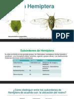 Hemiptera_Heteroptera.pdf