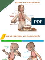 pptinhalaciónexhalación