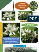 MANEJO DE CITRICOS PDF LEANDRO CHACIN