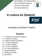 Trabalho - A cultura do Gladíolo.pptx