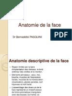anatomie-de-la-face