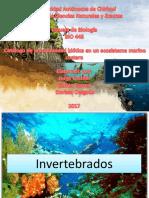 Invertebrados Marino Costeros Castillo, J; Correa, K; Delgado, D.