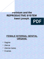 perineum and reproductive system