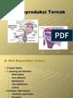 03-Alat Reproduksi Ternak.ppt
