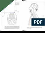 Aparato Respiratorio pdf