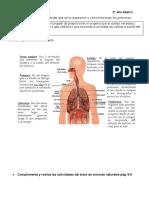 Ciencias naturales     sistema respiratorio
