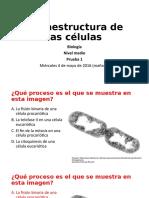 Presentación y preguntas de ultraestructura de las células