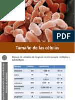 Tamaño de las células.pptx