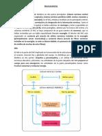 Neuroanatomía resumen