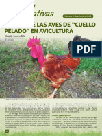 Revista Alternativas Avicolas Cuello Pelado - España