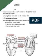 LBYBIO1 Circulatory System-Arterial system