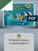 7. Núcleo celular